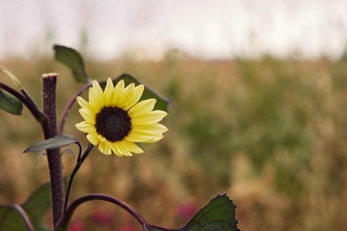 Fleur d'automne Annapolis Valley