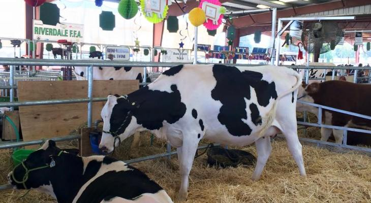 Old-time Fun at Caruthers District Fair