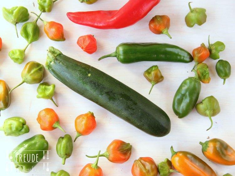 zucchini melanzani auberginen auflauf vegetarisch freude am kochen. Black Bedroom Furniture Sets. Home Design Ideas