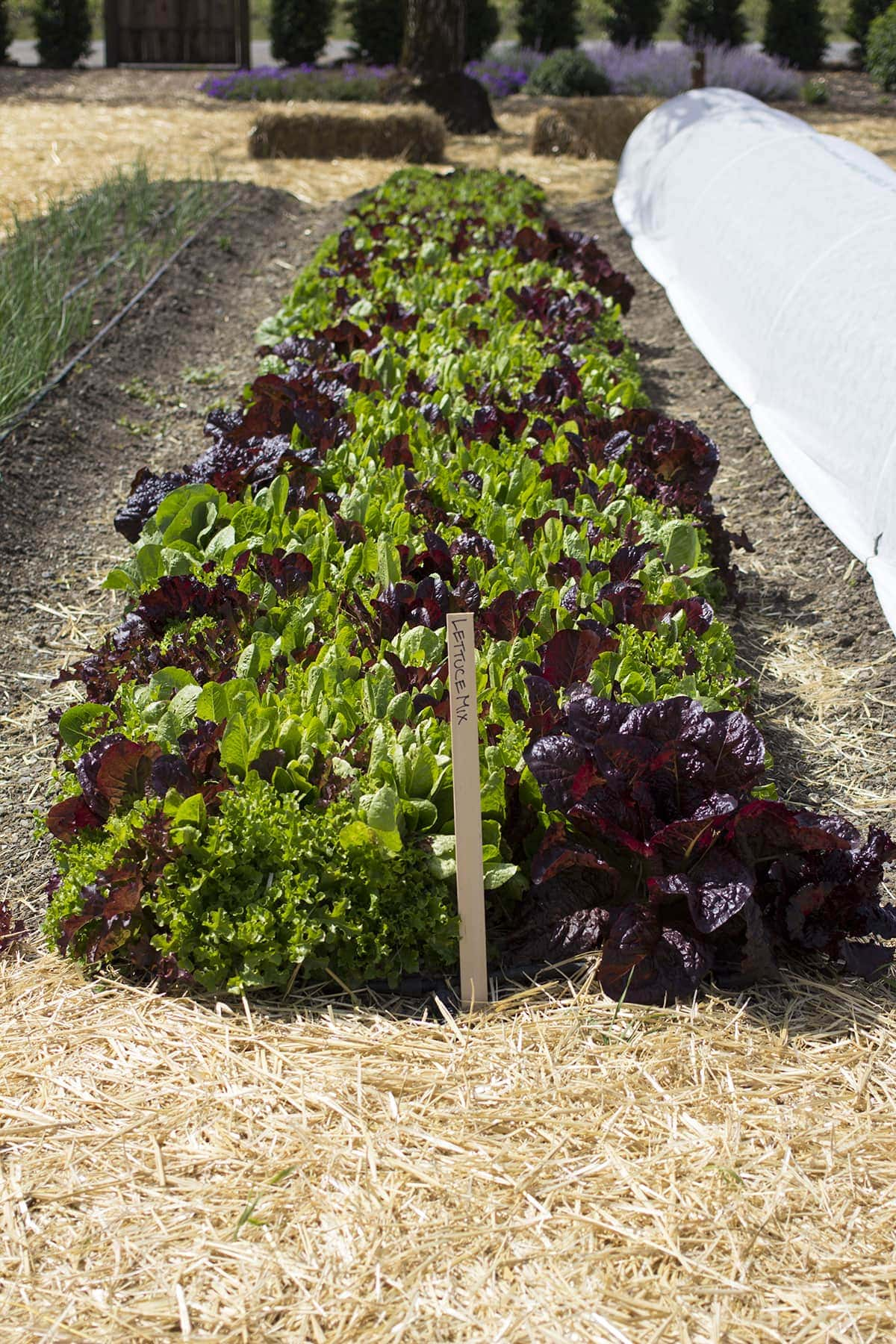 Gardening Daydreams At Kendall Jackson Freutcake Freutcake
