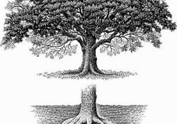 Oak_Tree_Oak_Roots.jpg