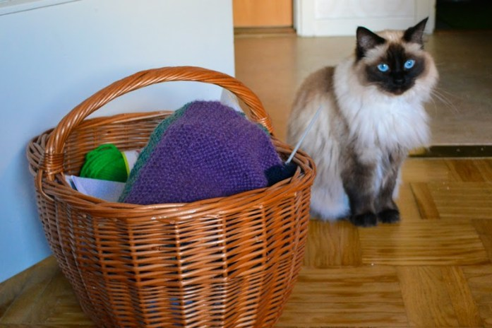 ragdoll cat by basket of yarn