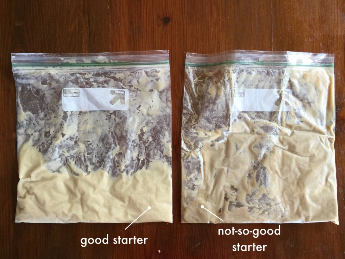 Tutorial - Good vs Not-So-Good Amish Friendship Bread Starter