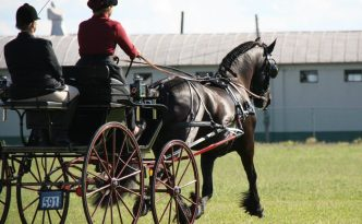 Sjaantje Sport doing the FEI # 9 test in Hughesville, PA.