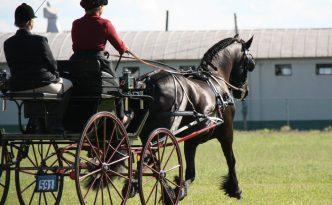Sjaantje Sport doing the FEI # 9 test in Hughesville, PA. Photo by: Jessica Gabler