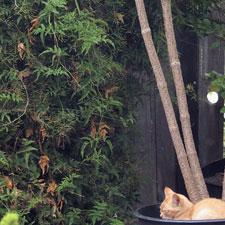 orange-kitten-P8202824