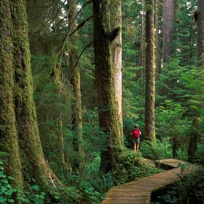 Carmanah Walbran Provincial Park - BC Tourism/JF Bergeron