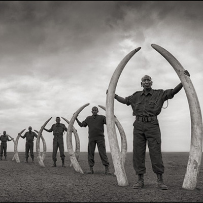 Rangers with Tusks of Killed Elephants - Nick Brandt