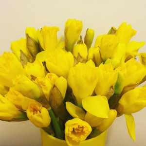 daffodils bright yellow epig kbnmoms momsoninstagram