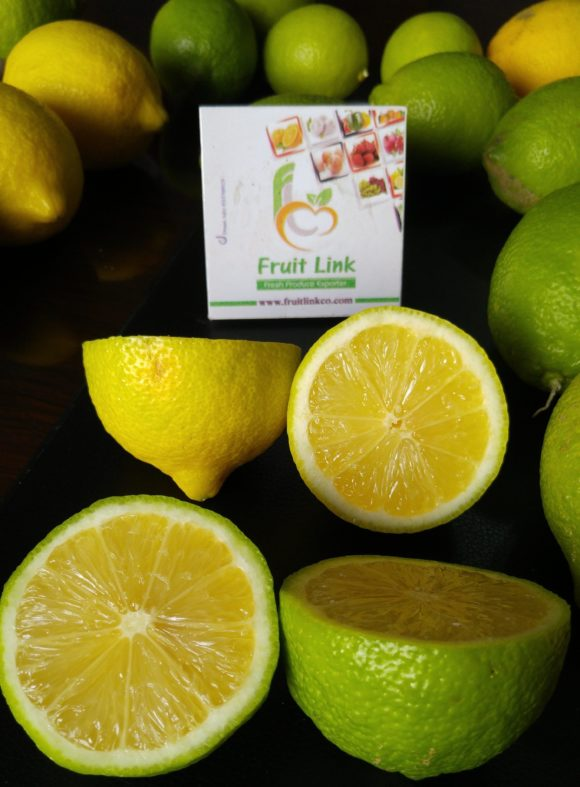 Lemon from Egypt, Fresh, Tasty and ready for export by Fruit Link