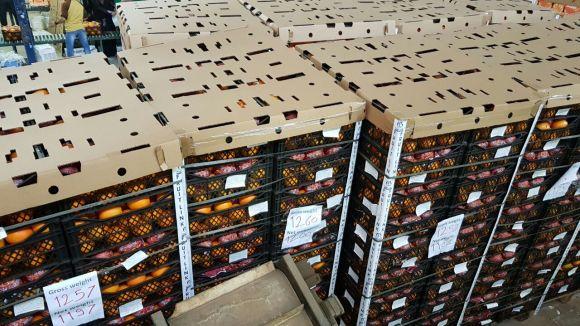 Valencia Oranges ready for shipment | Fruit Link
