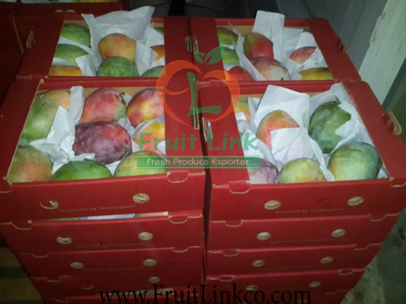 Egyptian mangoes' packing by Fruit Link