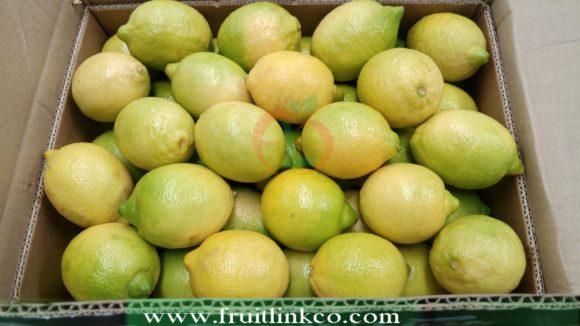 Lemons Egypt carton packaging by fruit link