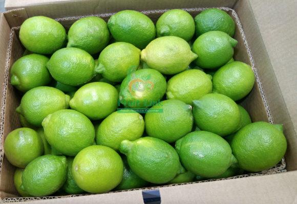 Egyptian Lemons -Fresh- ready for export by Fruit Link