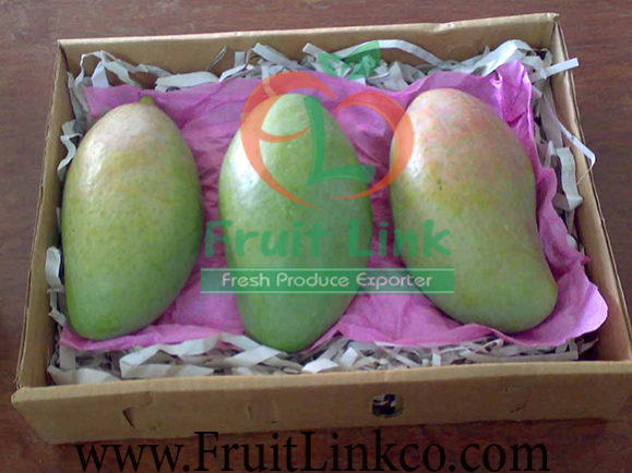 Sinara -Fresh Mango- by Fruit Link