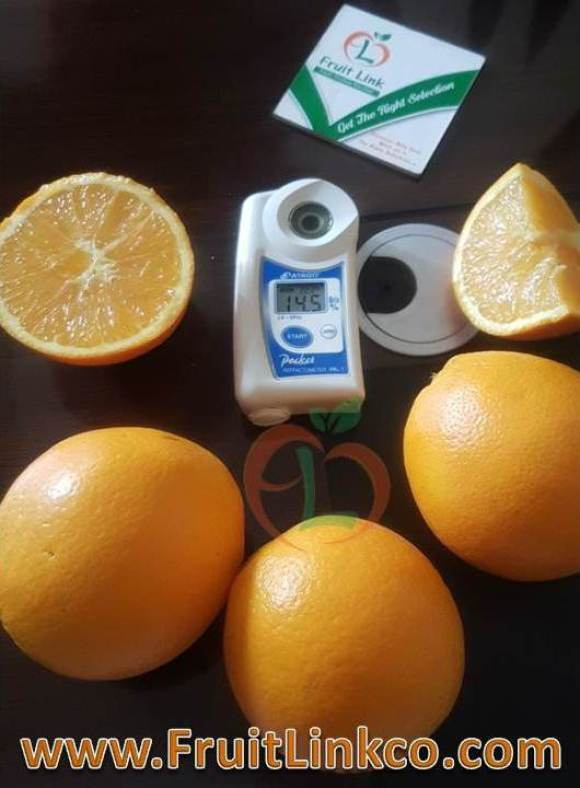 navel oranges brix level fresh from Egypt in season now and ready for export with full coloration