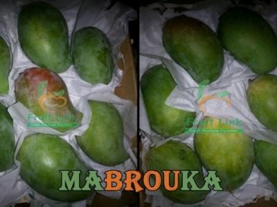mabrouka
