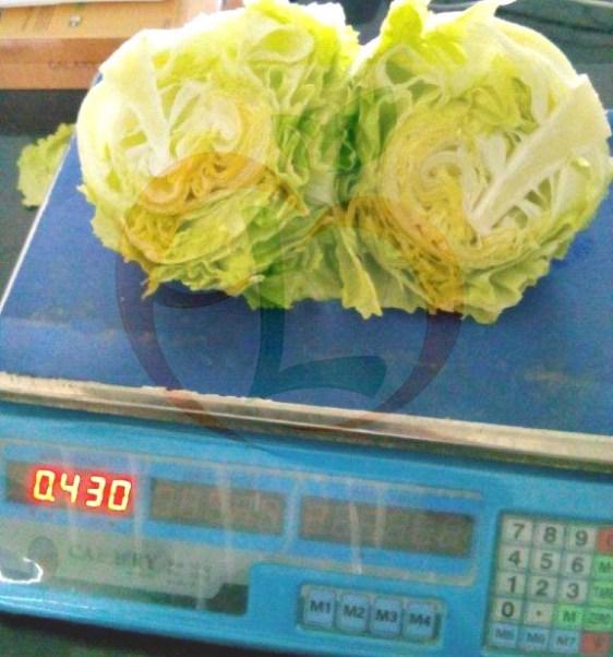 lettuce-3