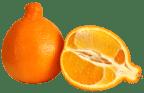 Minneola Fruit | Citrus | Fruit Link