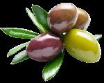 olives by Fruit Link