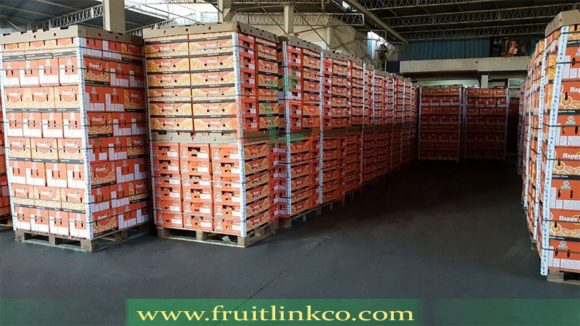 Navel Oranges pallets | Fruit Link