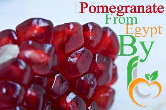 pomegranate Fruit Link