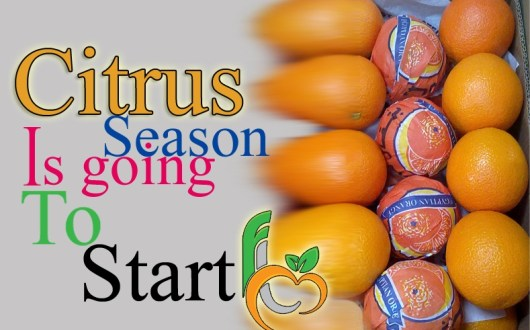 Citrus produce of Egypt
