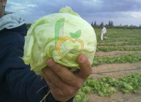 Fresh Vege Egy