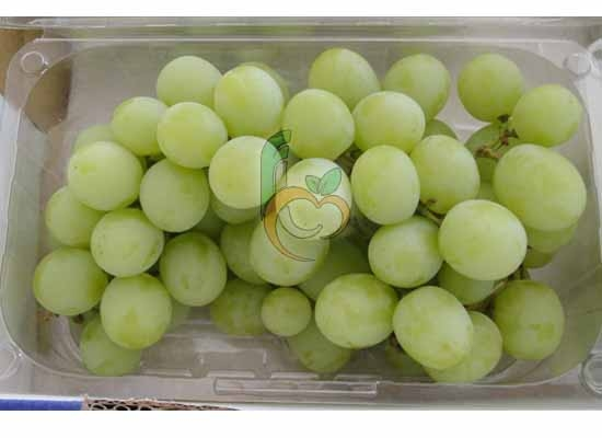 fresh Grapes in Punnet Pack by Fruit Link