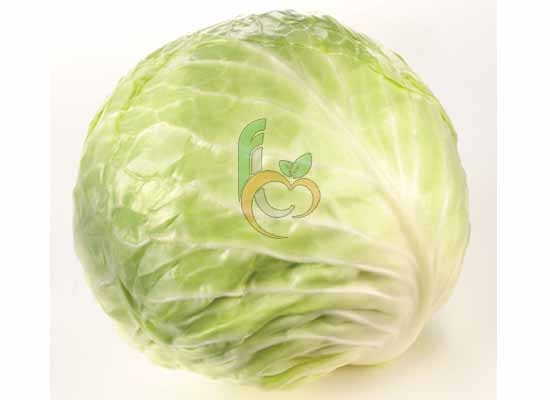 Fresh white Lettuce