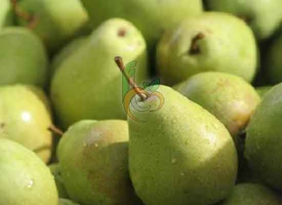 Green crushed Pear