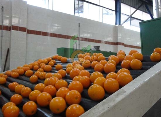 Egyptian Packing house of CItrus