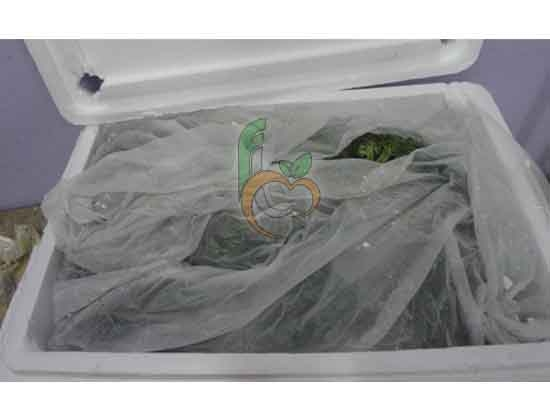 Ice packing