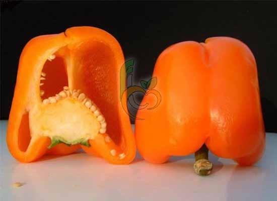 Orange Capsicum