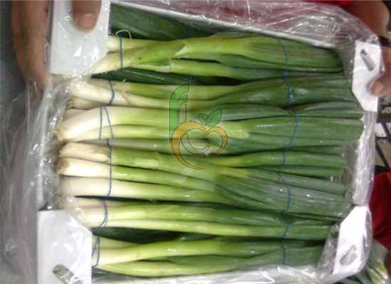 Spring Green Onions pack