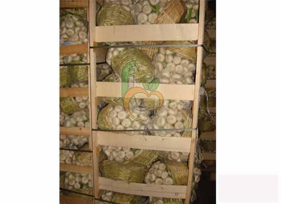 Fresh Garlic Pallet