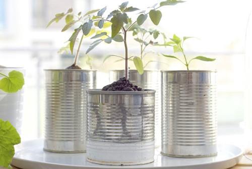 tin_can_planters_main