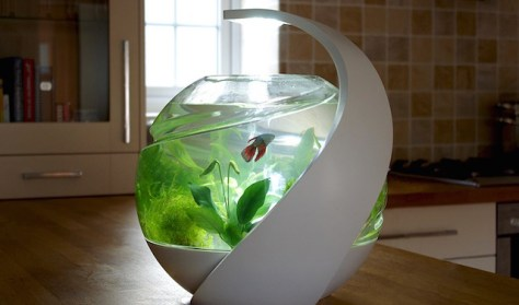 last year his new product on Kickstarter, a self cleaning fish tank