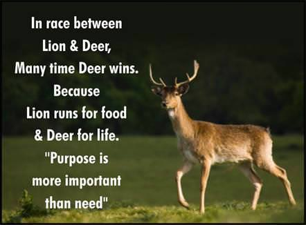 Deer and Lion
