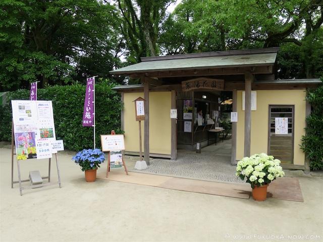 Ajisai Festival Jun 2016 123