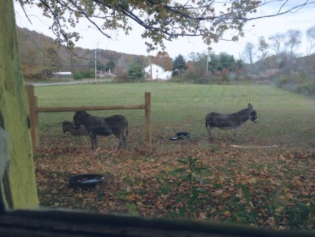 Donkeys out my window  146