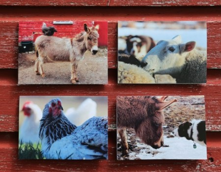 """Peaceable Kingdom"" Notecards By Jon Katz"
