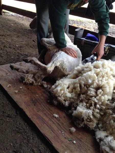 That's Deb under that coat of wool.