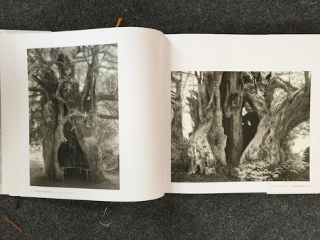 "Beth Moon's Book, ""Ancient Trees"""