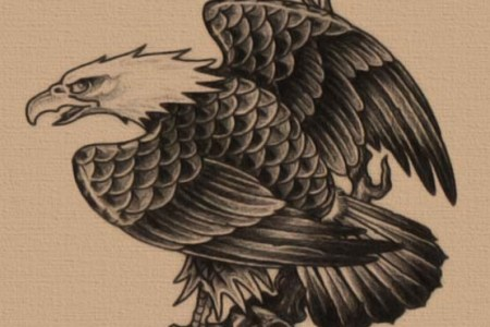 free eagle tattoo designs 555x555