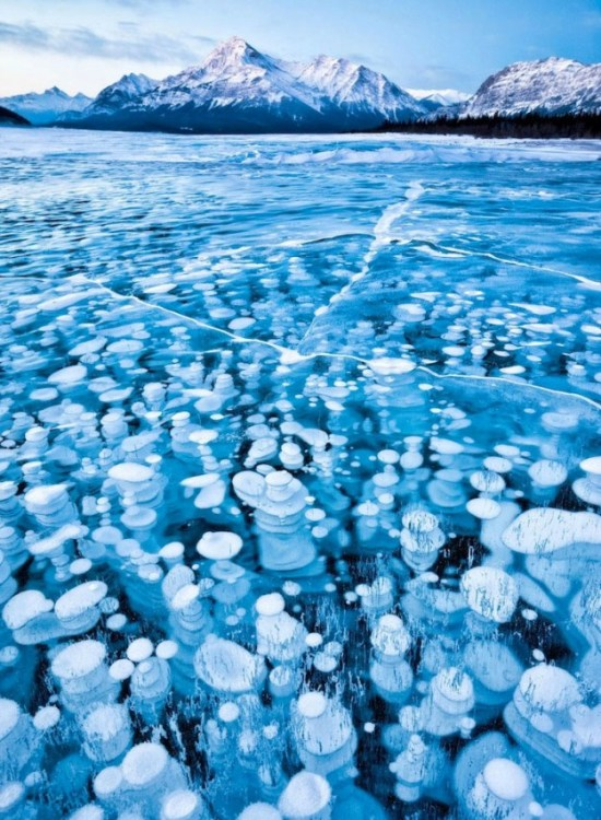 Incredible-ice-bubbles-in-Lake-Abraham-001