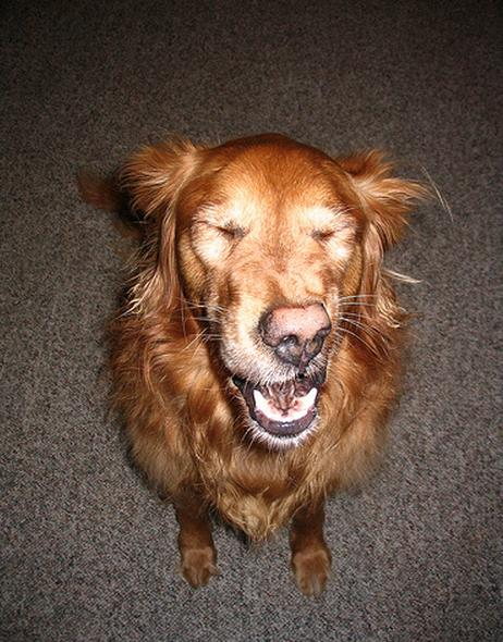 19 Dogs Caught Mid-Sneeze 010