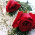Two-Beautiful-Red-Roses