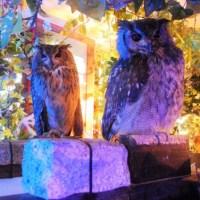 owl-no-mori-0708-cover-1024x576