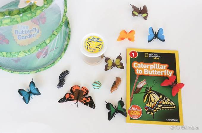 caterpillar-to-butterfly-life-cycle-activity